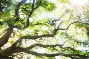 The Writing Tree