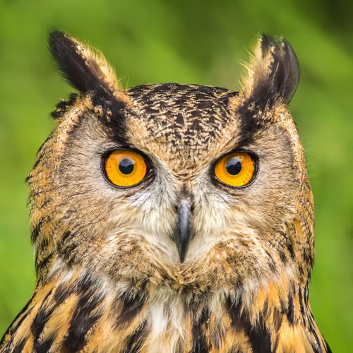 As Wise as an Owl Puppet
